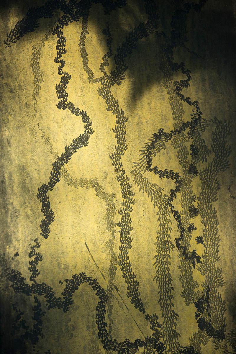 Вторая жизнь растений, © Рон Тир, 2-е место, Фотоконкурс «Международный садовый фотограф года»