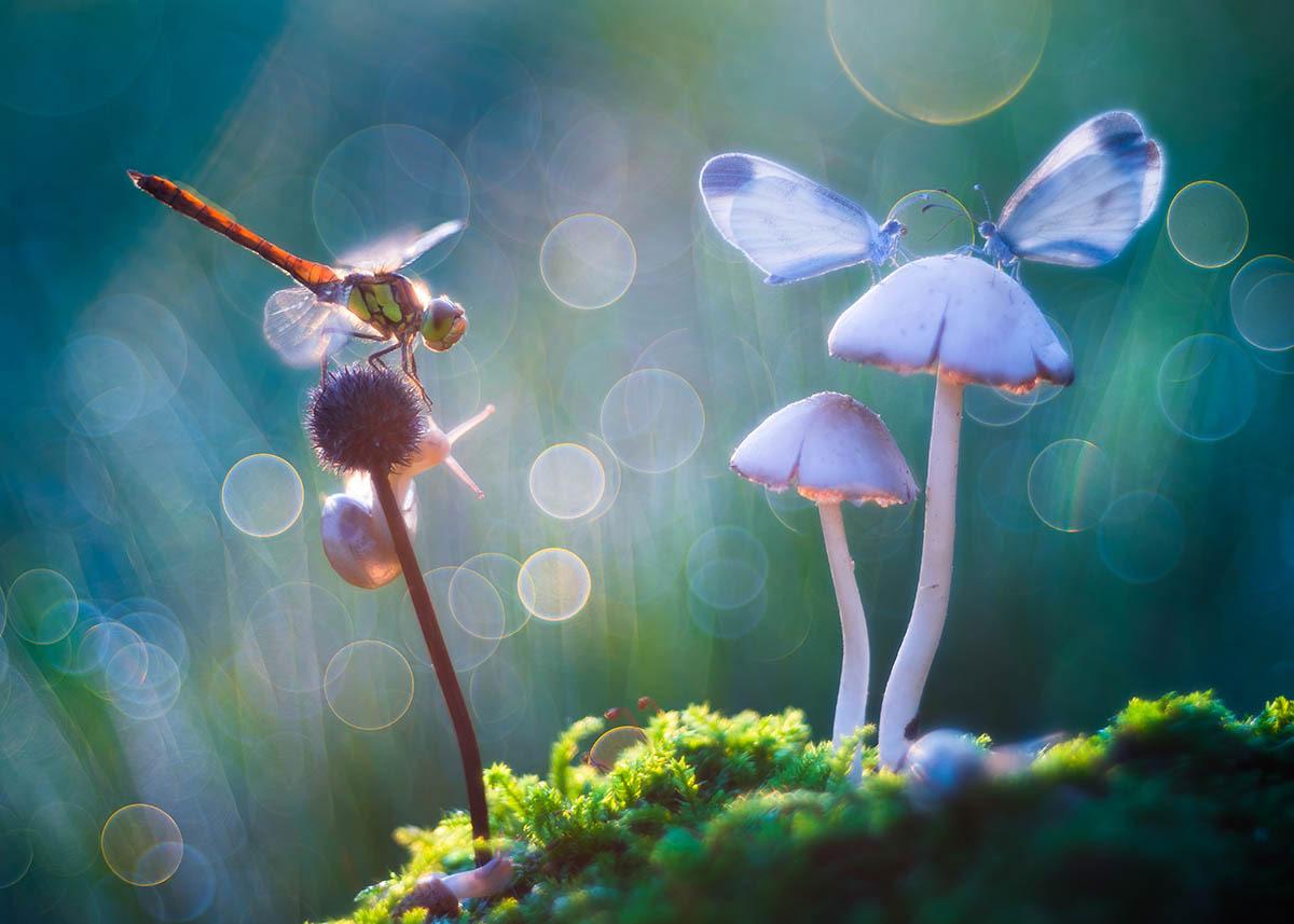 Сказка, © Петр Саболь, 2-е место, Фотоконкурс «Международный садовый фотограф года»