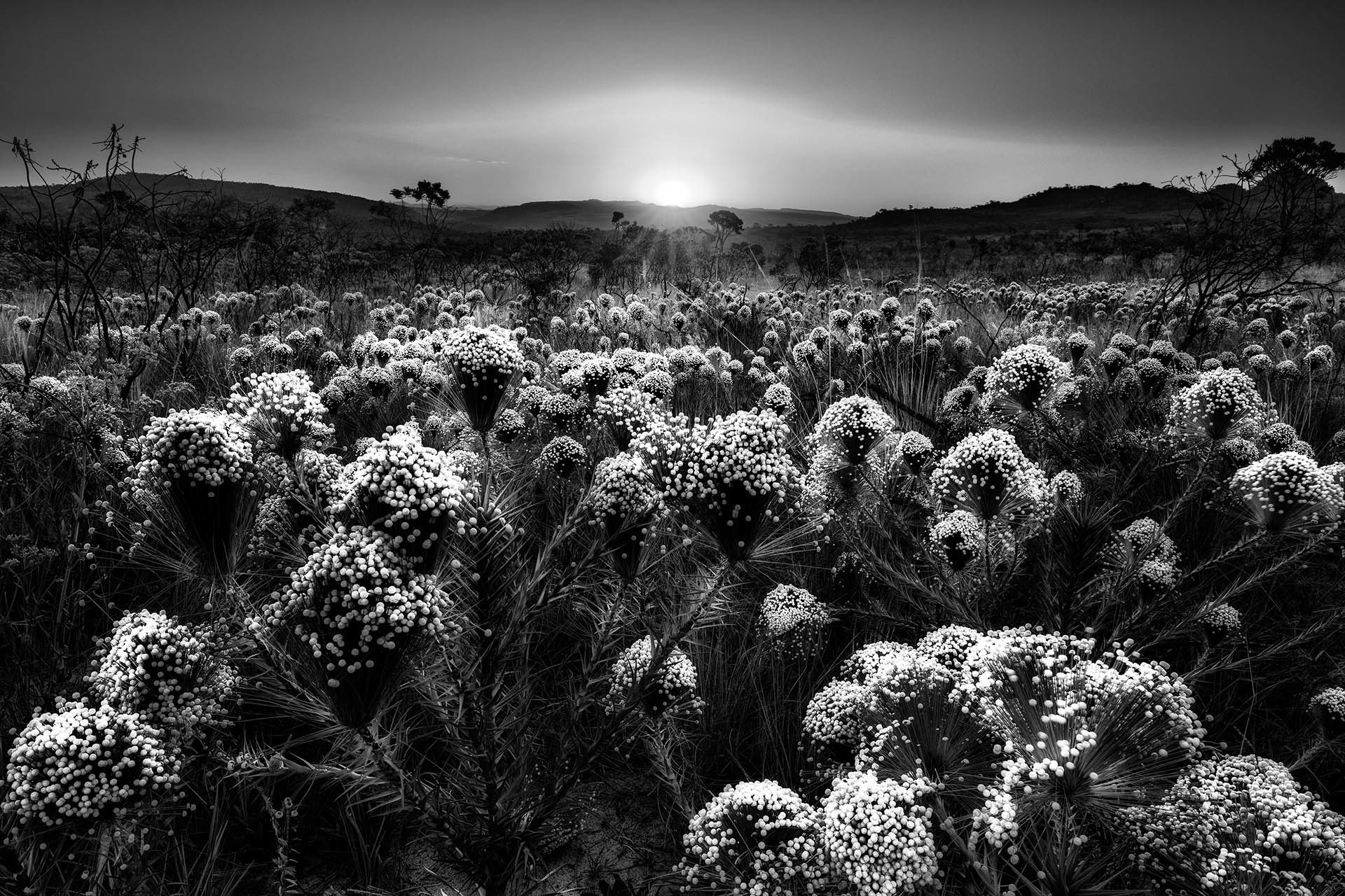 Заход солнца в Серрадо, © Марсио Кабрал, 3-е место, Фотоконкурс «Международный садовый фотограф года»