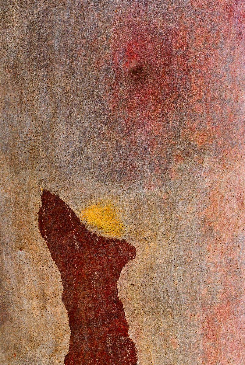 Сотворение, © Питер Пуллан, 2-е место, Фотоконкурс «Международный садовый фотограф года»