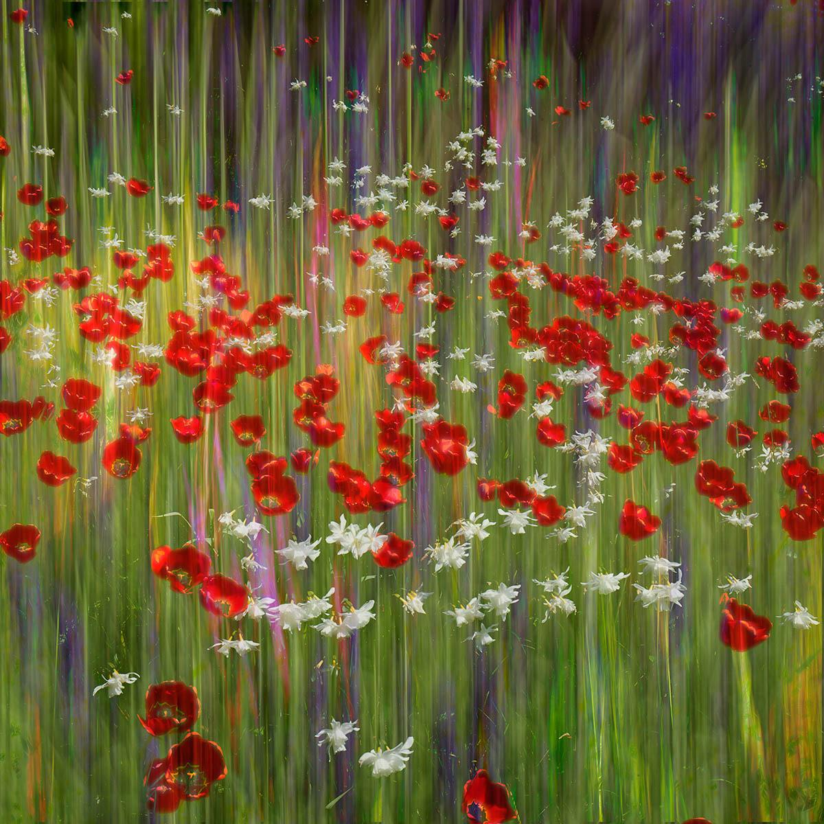 Цветочные сны, © Грег Виваш, 3-е место, Фотоконкурс «Международный садовый фотограф года»