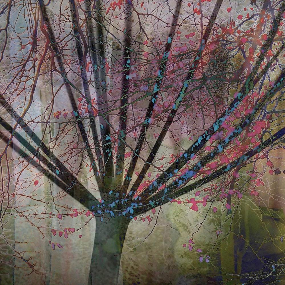 Дерево — головка семяни, © Линда Дункальф, 2-е место, Фотоконкурс «Международный садовый фотограф года»