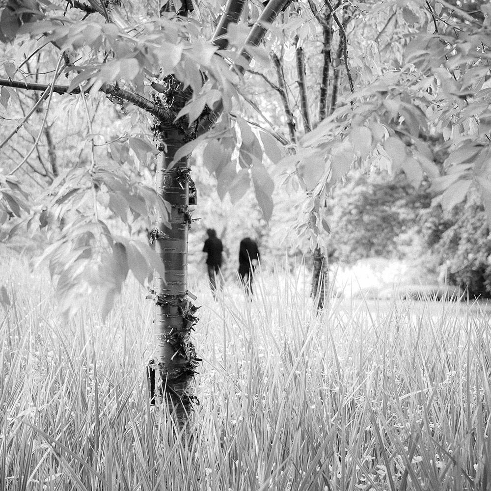 Прогулка в парке, © Рэйчел Чаппелл, 3-е место, Фотоконкурс «Международный садовый фотограф года»