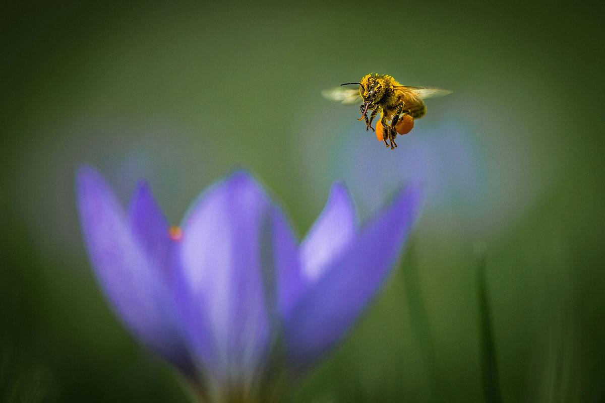 Полностью загружен, © Тамми Марлар, 2-е место, Фотоконкурс «Международный садовый фотограф года»