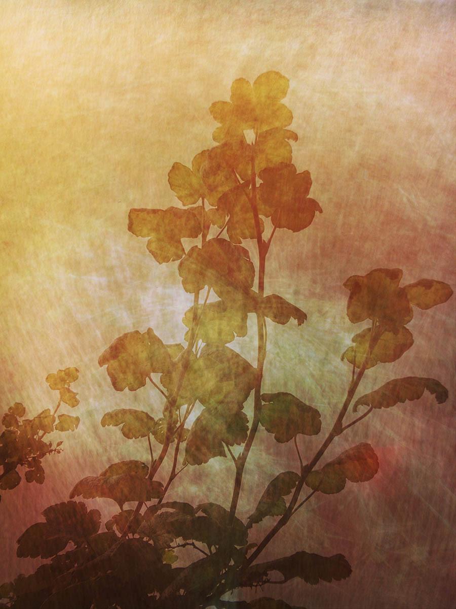 Красновато-коричневая смородина, © Керстин Шелберг, 2-е место, Фотоконкурс «Международный садовый фотограф года»