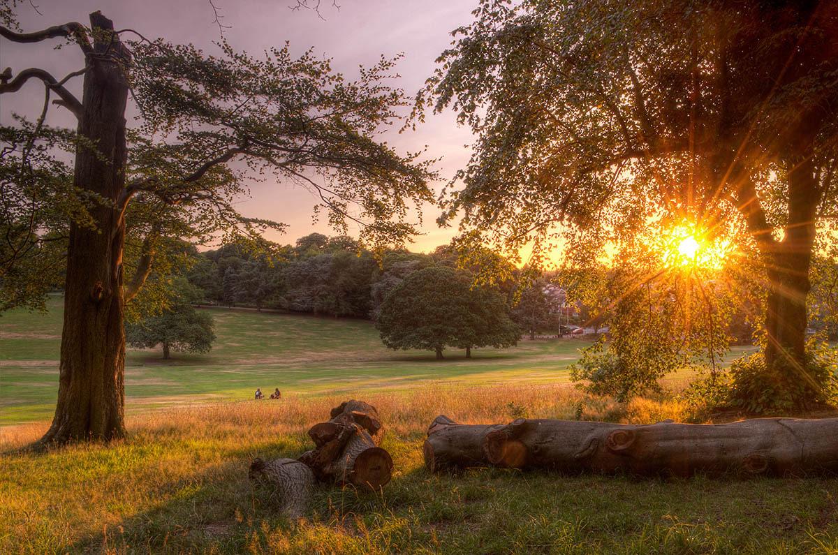 Последние лучи солнца, © Саймон Ли, 1-е место, Фотоконкурс «Международный садовый фотограф года»