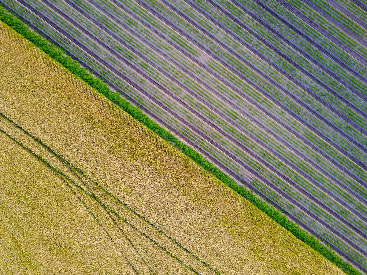 Арт-кадрирование, © Уилл Дженкинс, 3-е место, Фотоконкурс «Международный садовый фотограф года»