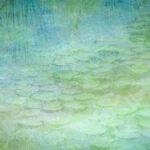 Водяные лилии и лотос, © Хун Чжао, 3-е место, Фотоконкурс «Международный садовый фотограф года»