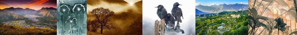 Фотоконкурс «Международный садовый фотограф года» — IGPOTY