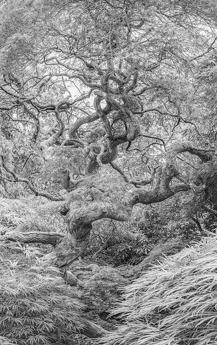 © Саймон Хэдли-Спаркс, Перепрыгивая через карму, Фотоконкурс «Международный садовый фотограф года» — IGPOTY