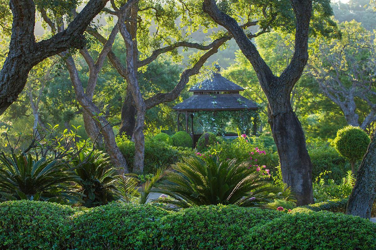 © Джефф Скотт Симпсон, Беседка из пробкового дуба, Фотоконкурс «Международный садовый фотограф года» — IGPOTY