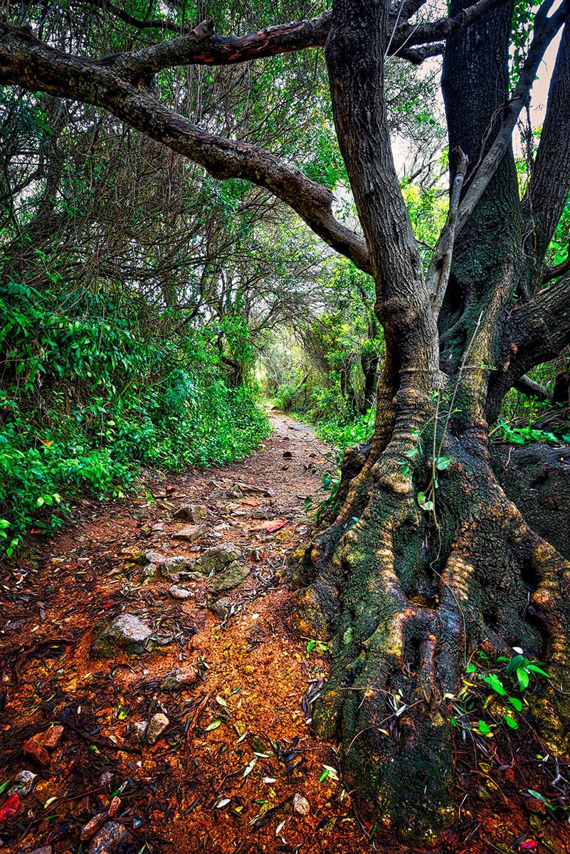 © Эрнест Мартинес, Прогулка по средиземноморским ступеням, Фотоконкурс «Международный садовый фотограф года» — IGPOTY
