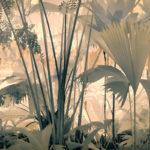 © Джоселин Хорсфолл, Тропическая страна чудес, Фотоконкурс «Международный садовый фотограф года» — IGPOTY