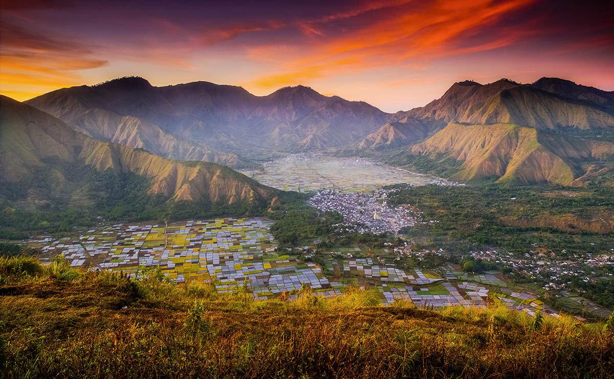 © Суванди Чандра, Красочные поля, Фотоконкурс «Международный садовый фотограф года» — IGPOTY