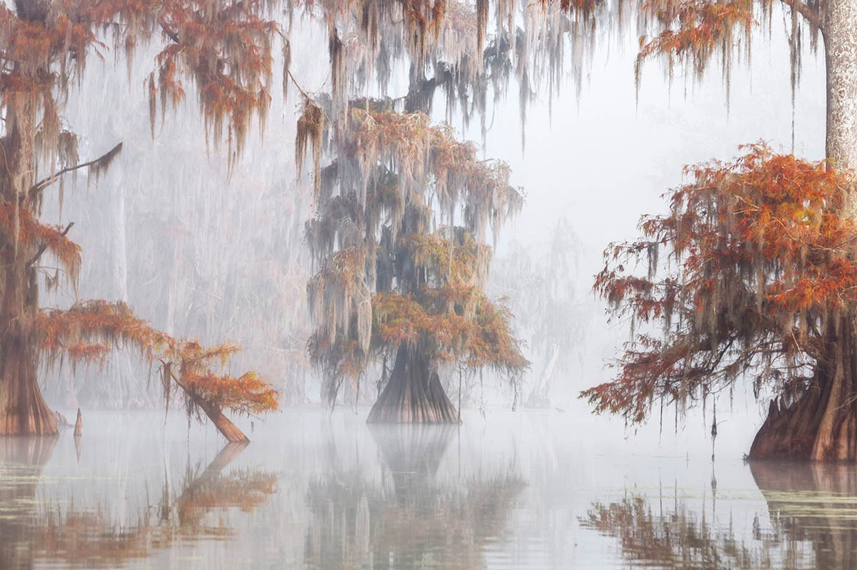 © Роберто Марчегиани, Туманная протока, Фотоконкурс «Международный садовый фотограф года» — IGPOTY