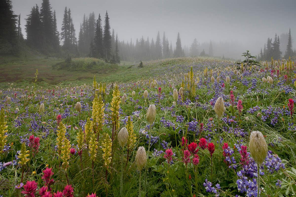 © Боб Гиббонс, Гора Ренье в тумане, Фотоконкурс «Международный садовый фотограф года» — IGPOTY