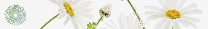 Международный садовый фотограф года — IGPOTY