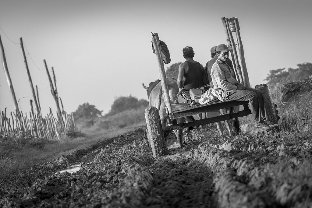 Мысли в дороге, © Йоанди Мануэль Робаина Фуэнтес, Фотоконкурс Ikei