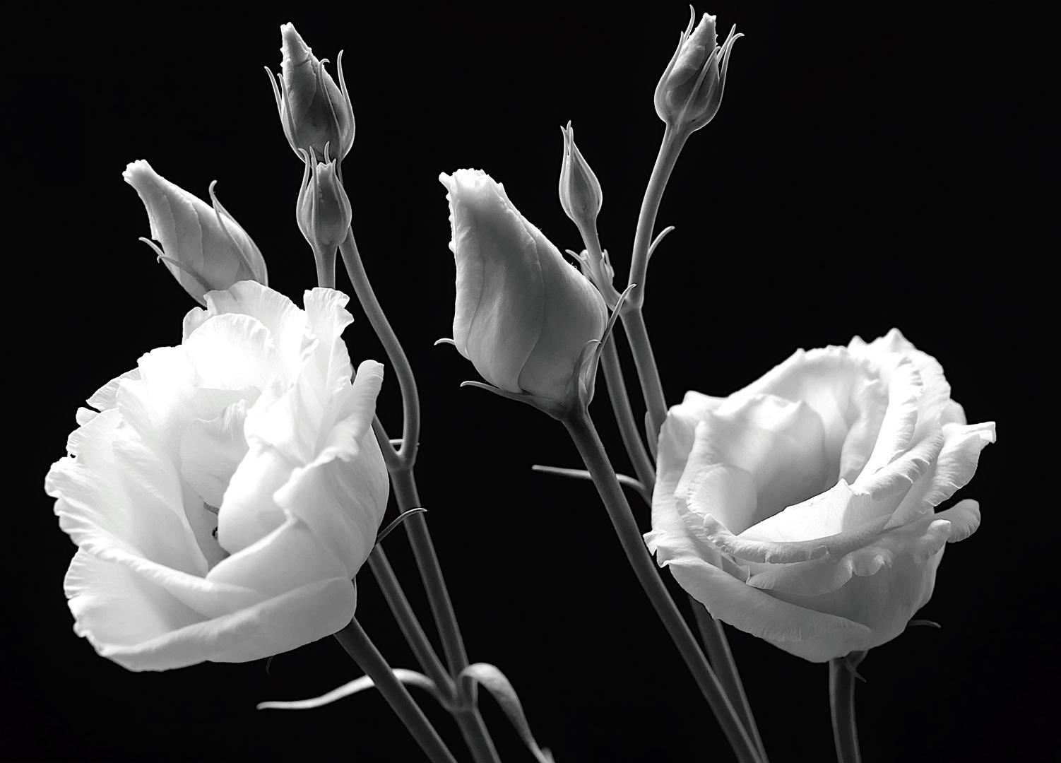 © Венди Б., Фотоконкурс «В чёрно-белом» от PDN