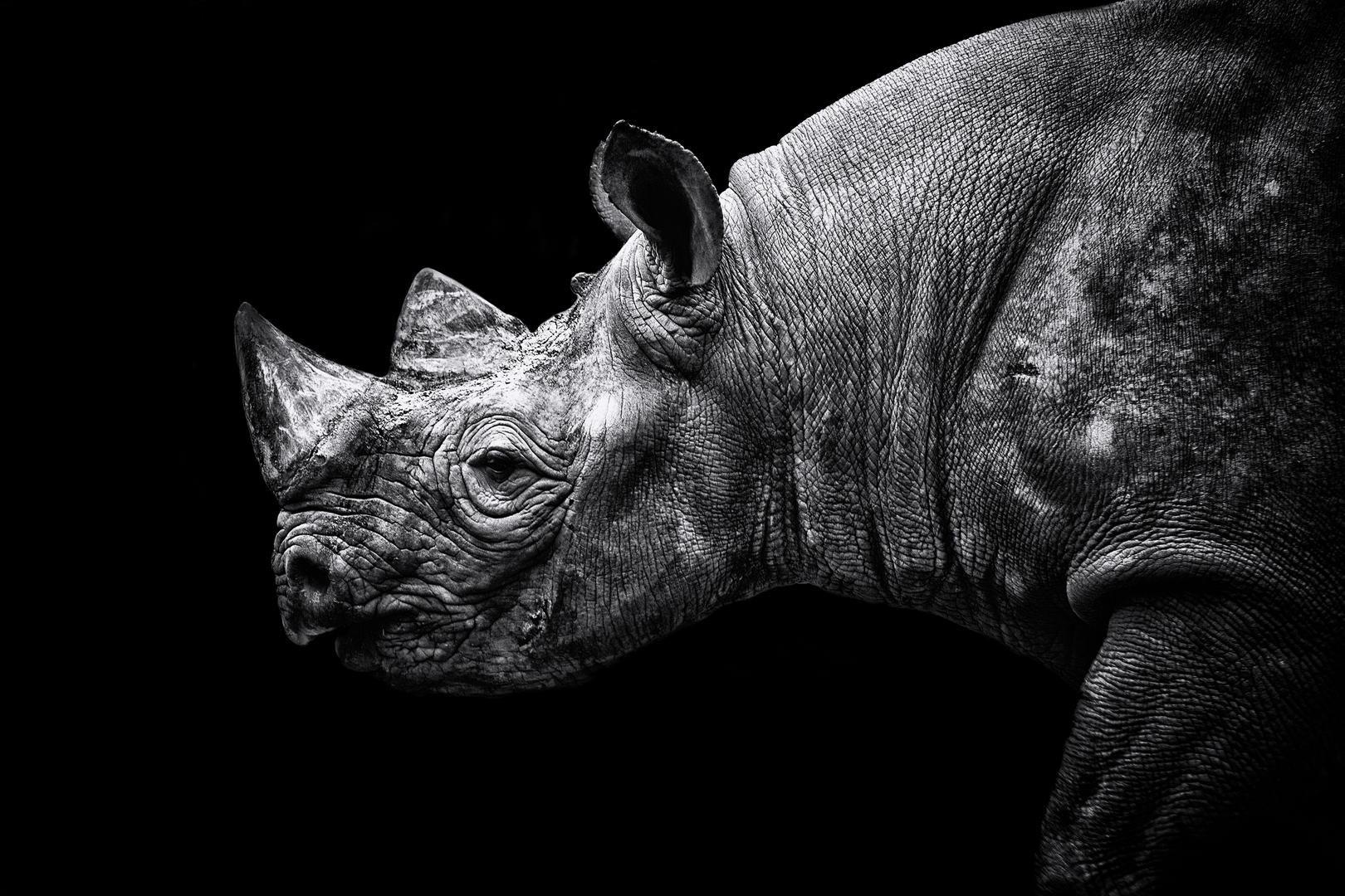 © Пол Нэш, Фотоконкурс «В чёрно-белом» от PDN