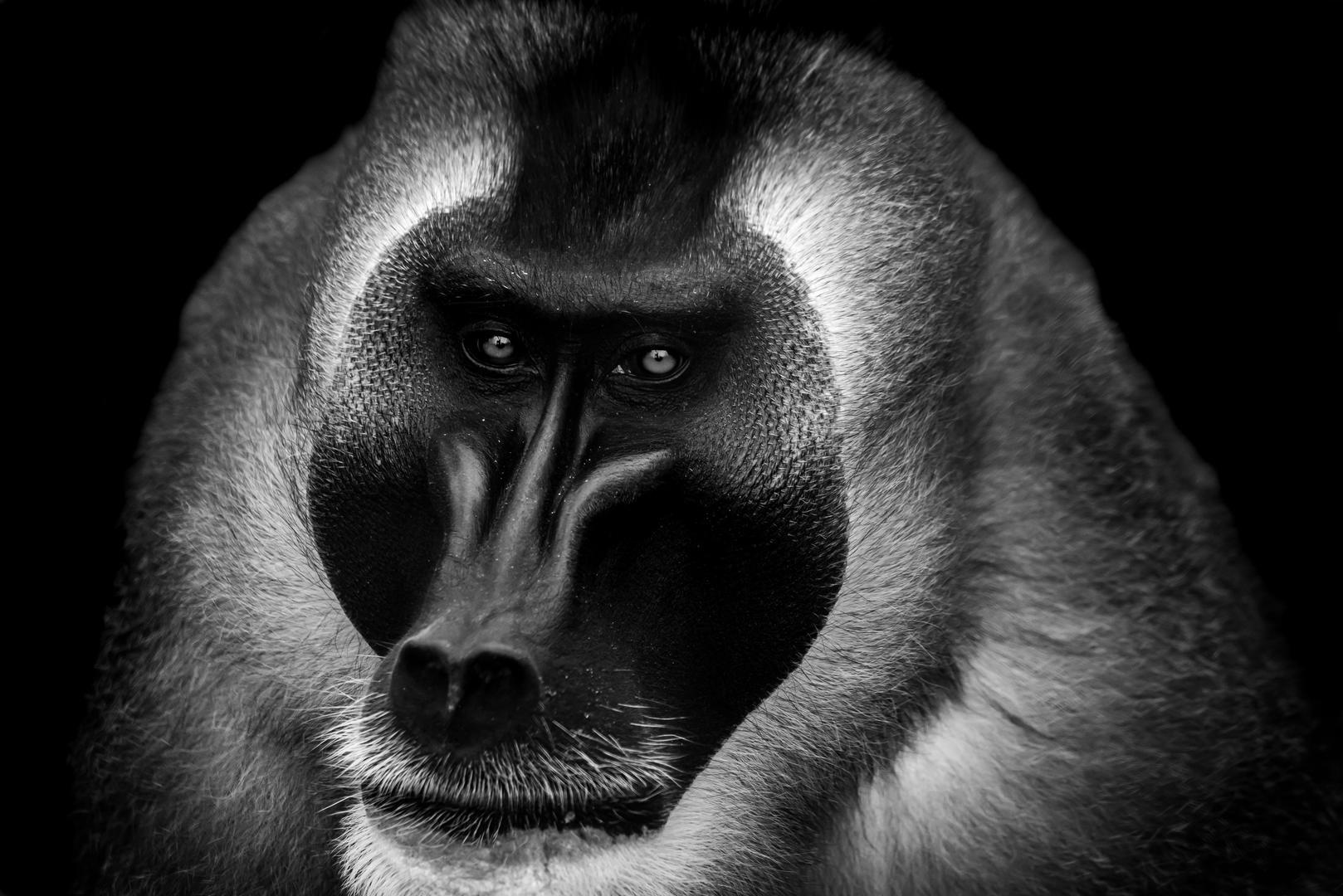© R G Photography, Фотоконкурс «В чёрно-белом» от PDN