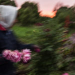 Огород, © Светлана Тарасова, Калуга, Победитель в номинации «ЭКО МИР: человек, гармония, природа», Конкурс репортажной фотографии «Памяти Александра Ефремова»
