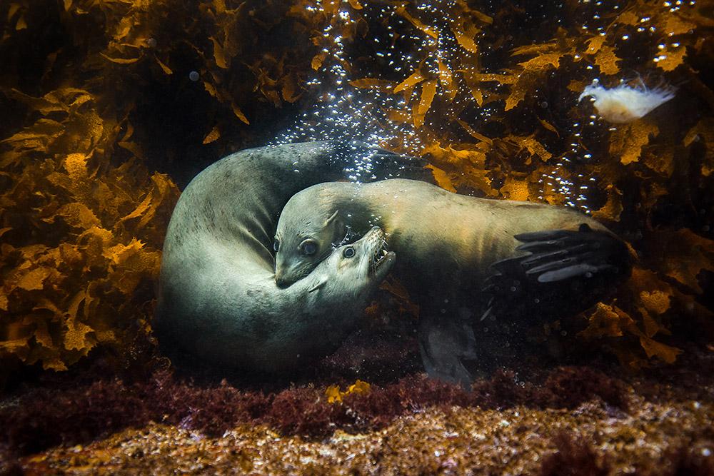 Ухаживание, © Филипп Турстон / Philip Thurston (Австралия), Международный фотограф года 2017 категории «Природа» — International Photographer of the Year — IPOTY