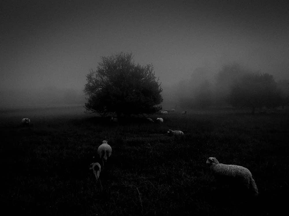 Утренний туман, © Сукру Мехмет Омур, Франция, Победитель категории «Природа», Конкурс мобильной фотографии iPhone