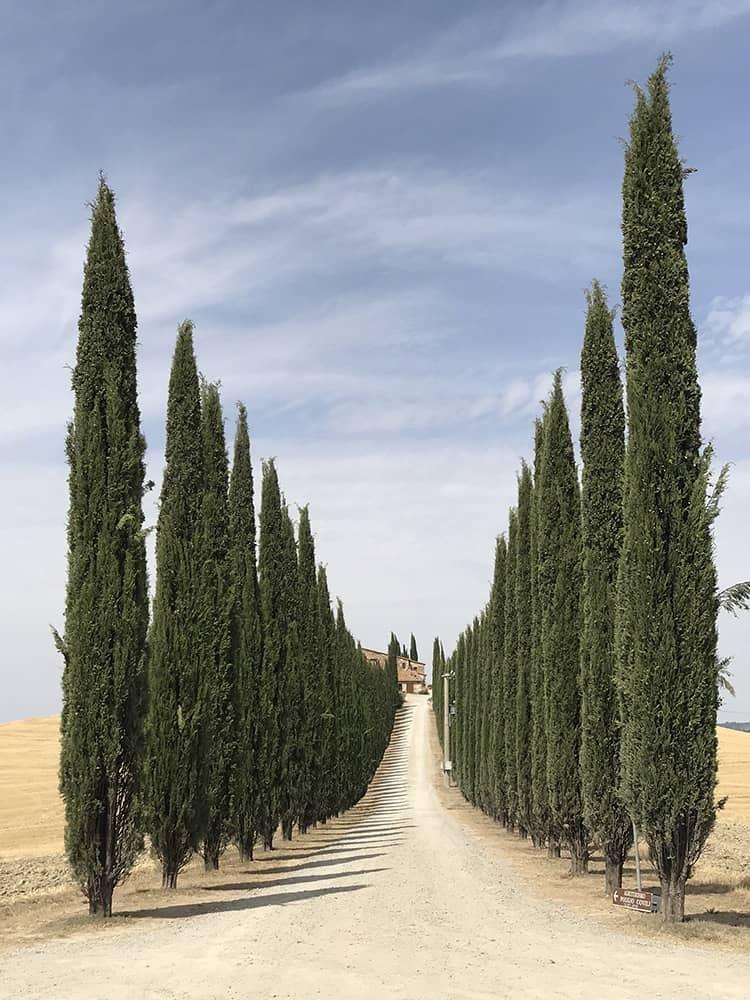 Дорога Тосканы, © Лидия Мунтян, Румыния, Победитель категории «Деревья», Конкурс мобильной фотографии iPhone