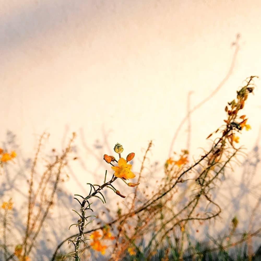 Светлый, © Элисон Хелена, США, Победитель категории «Растения», Конкурс мобильной фотографии iPhone