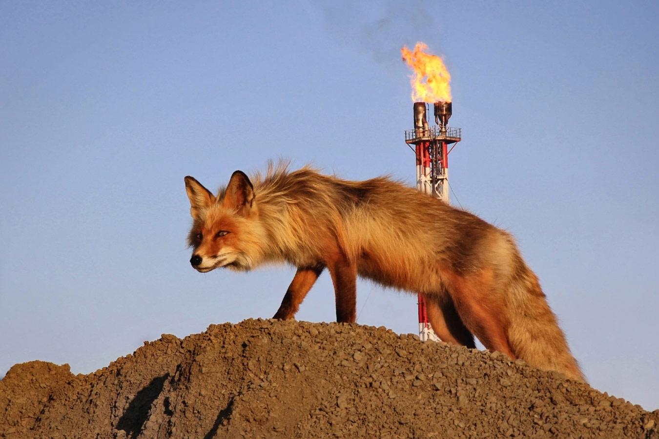 Хозяйка огненной трубы, Фотоконкурс «Энергетика современной России»