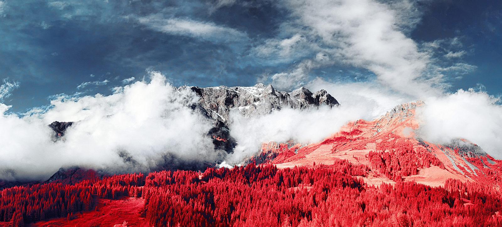 © Дэвид Хохлейтнер, Фотоконкурс «Жизнь в инфракрасном свете»