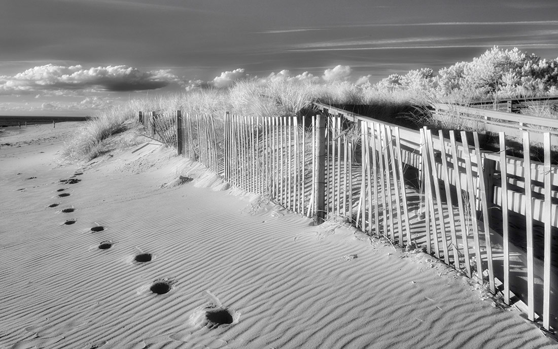 © Пенелопа Тейлор, Фотоконкурс «Жизнь в инфракрасном свете»