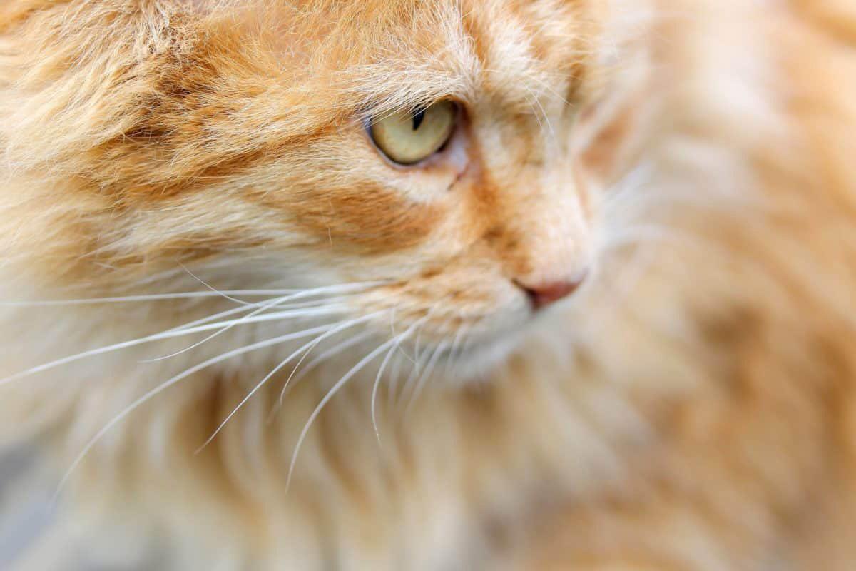 Фотоконкурс «Кошки»