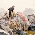 Живая, © Джулио Ди Стурко, Великобритания, 2-е место : Серия, Фотоконкурс «Экспозиция» от LensCulture