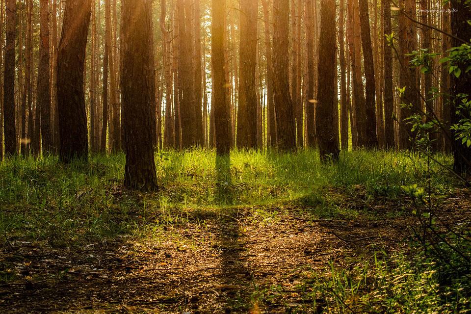 Фотоконкурс «Лес чудес» от ФГАУ «Оборонлес» Минобороны России