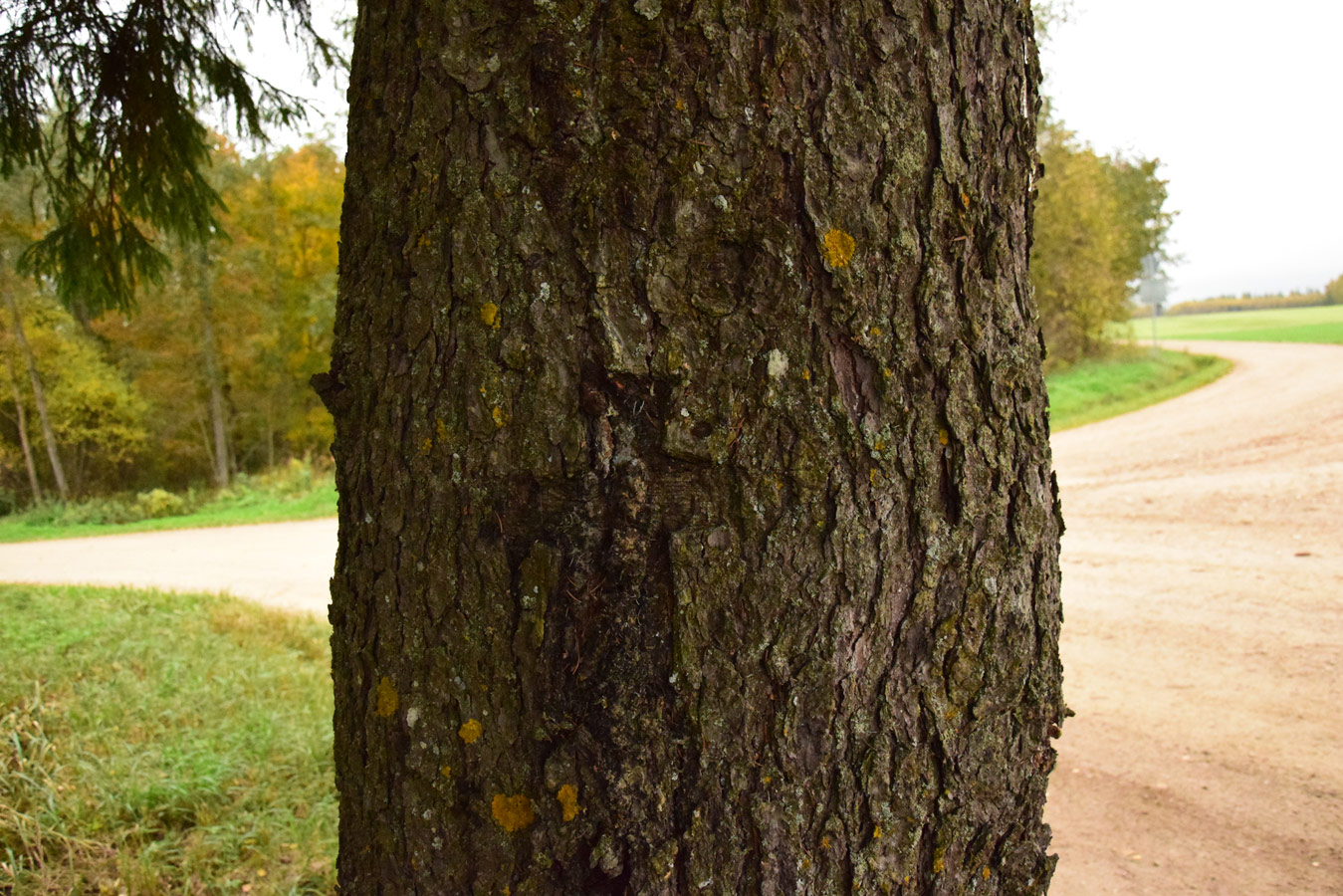 Дерево с крестом, © Ханна-Грете Рюютли, Фотоконкурс «Священные природные места»
