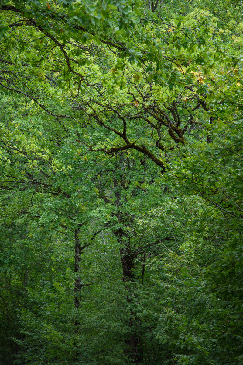 Протянутые руки, © Урве Херманн, Фотоконкурс «Священные природные места»