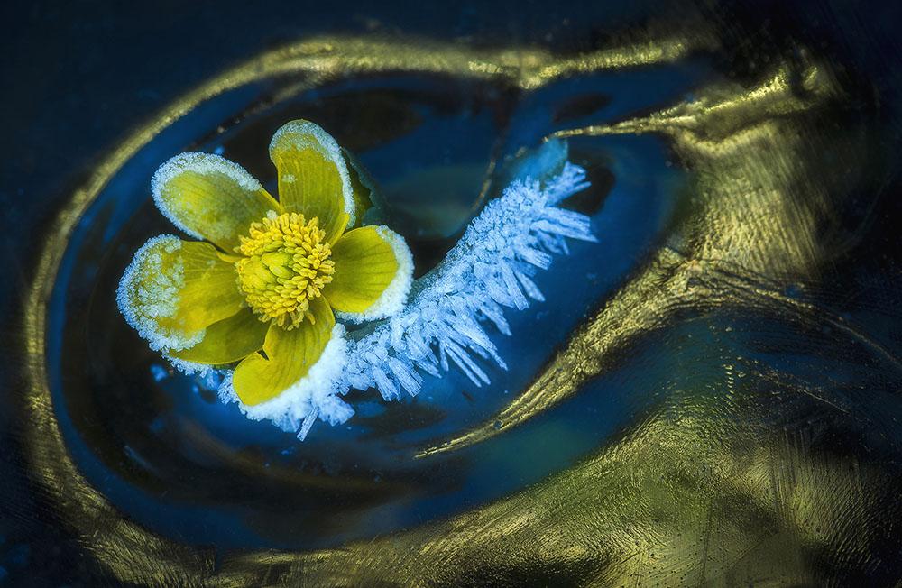 Замороженная весна, © Саба Дарози / Csaba Daróczi, Венгрия, Победитель в категории «Мир растений», Фотоконкурс Memorial Maria Luisa