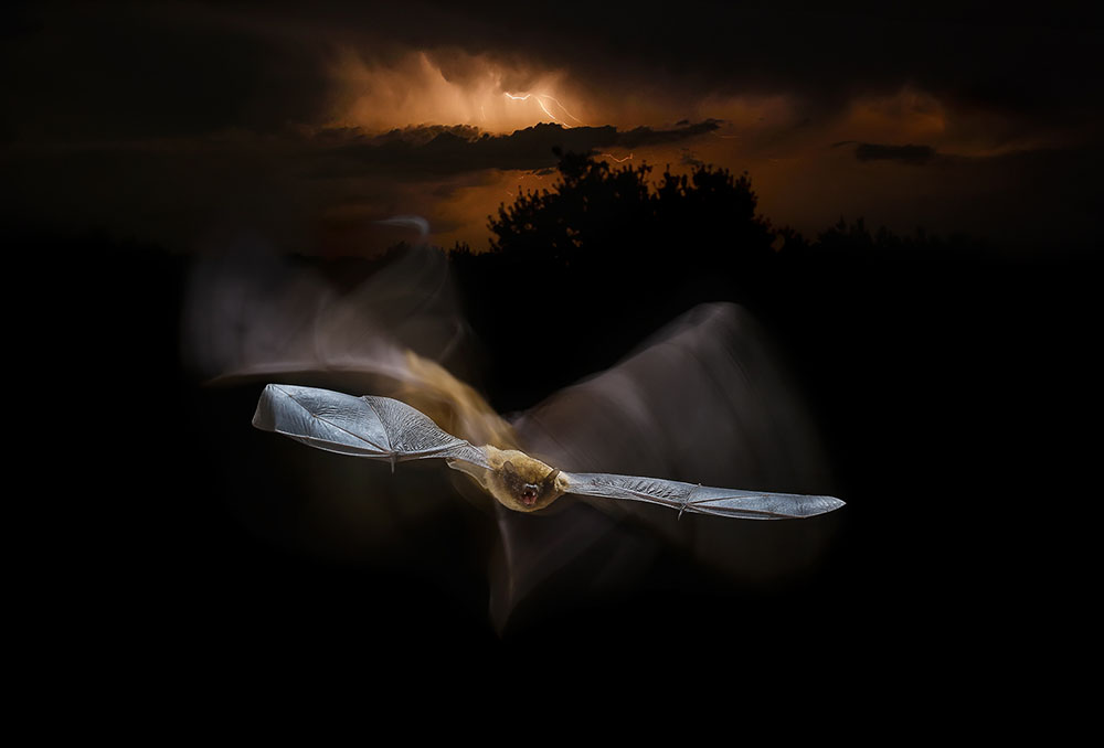Летающий под штормом, © Марио Сеа Санчес / Mario Cea Sánchez, Испания, Победитель в категории «Творческая фотография», Фотоконкурс Memorial Maria Luisa