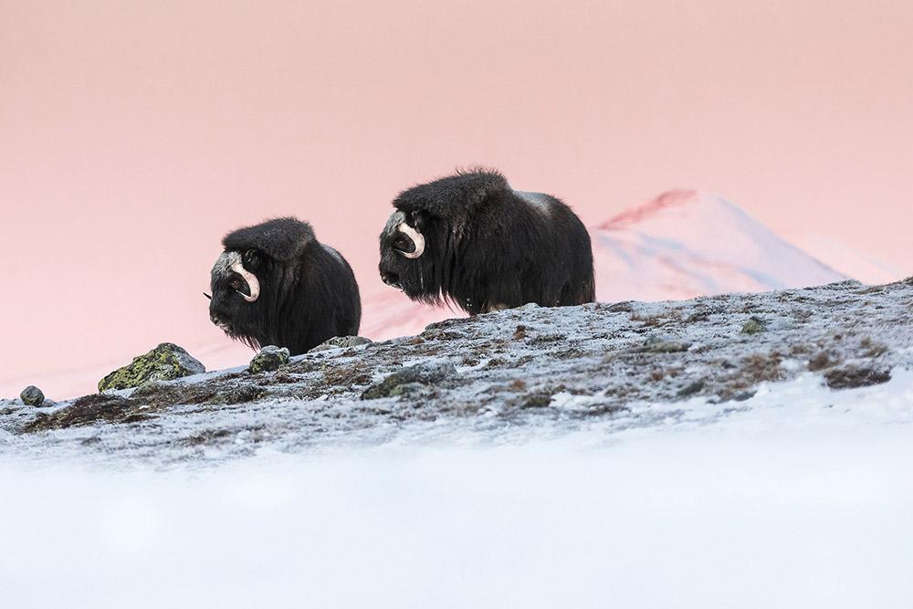 Арктический восход, © Марко Гайотти / Marco Gaiotti, Италия, Главный победитель «Природа», Гран-при Foto Ruano, Фотоконкурс Memorial Maria Luisa