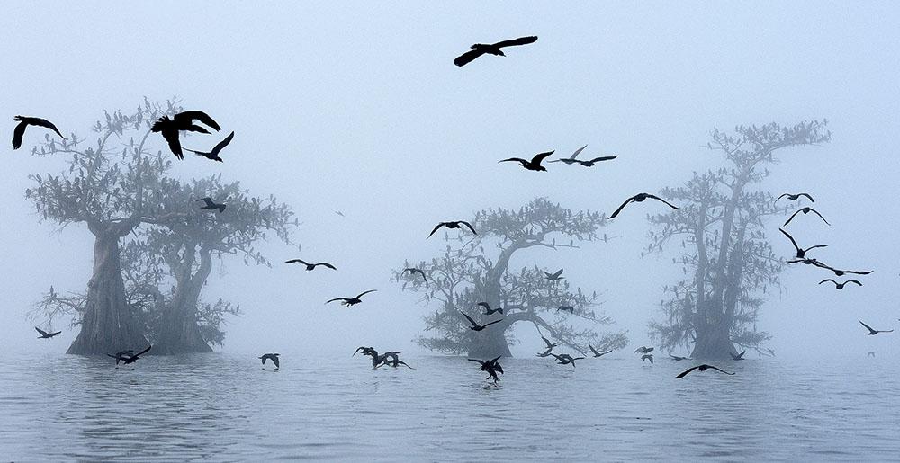 Бакланы и туман, © Георг Попп / Georg Popp, Австрия, Победитель в категории «Мир птиц», Фотоконкурс Memorial Maria Luisa