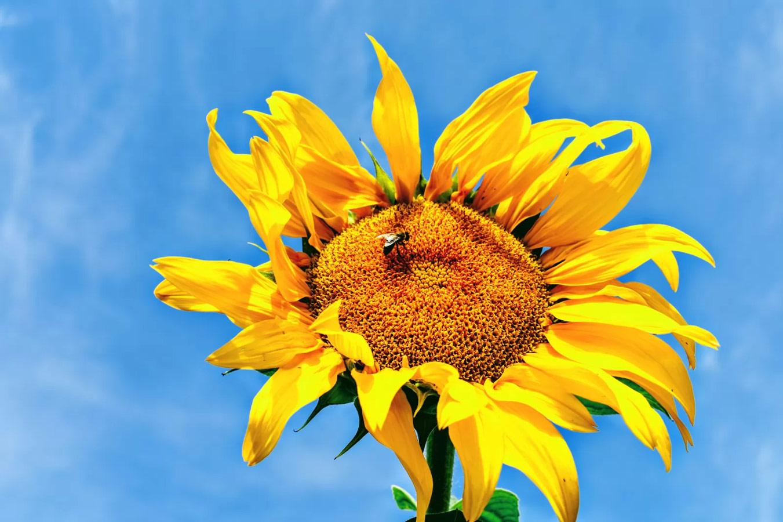 Солнечное настроение, © Наталья Колб, Победитель национального голосования — Россия, Фотоконкурс Metro Photo Challenge