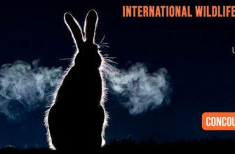 Международный конкурс фотографий дикой природы MONTIER