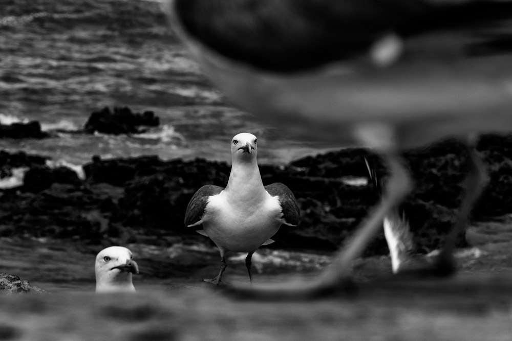 Птицы, © Лил Штайнберг (Израиль), Природное открытие года – 2018 (любитель), Фотоконкурс Monochrome Awards