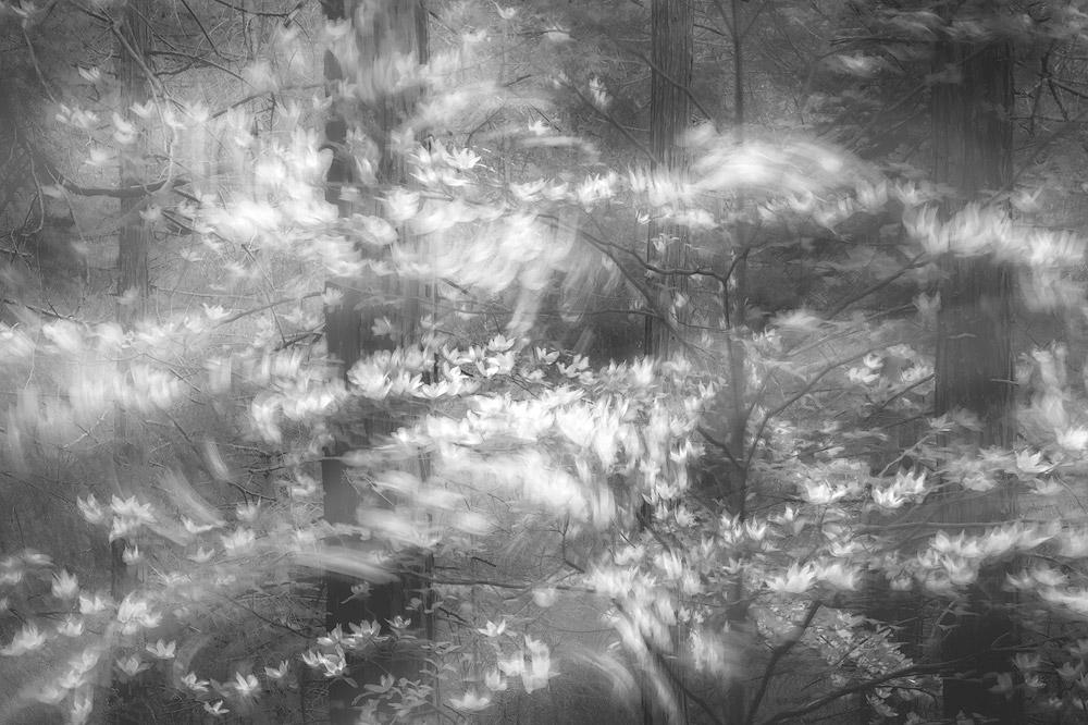 Когда лес шевелится, © Шарлотта Гибб (США), Природный фотограф года – 2018 (профессионал), Фотоконкурс Monochrome Awards