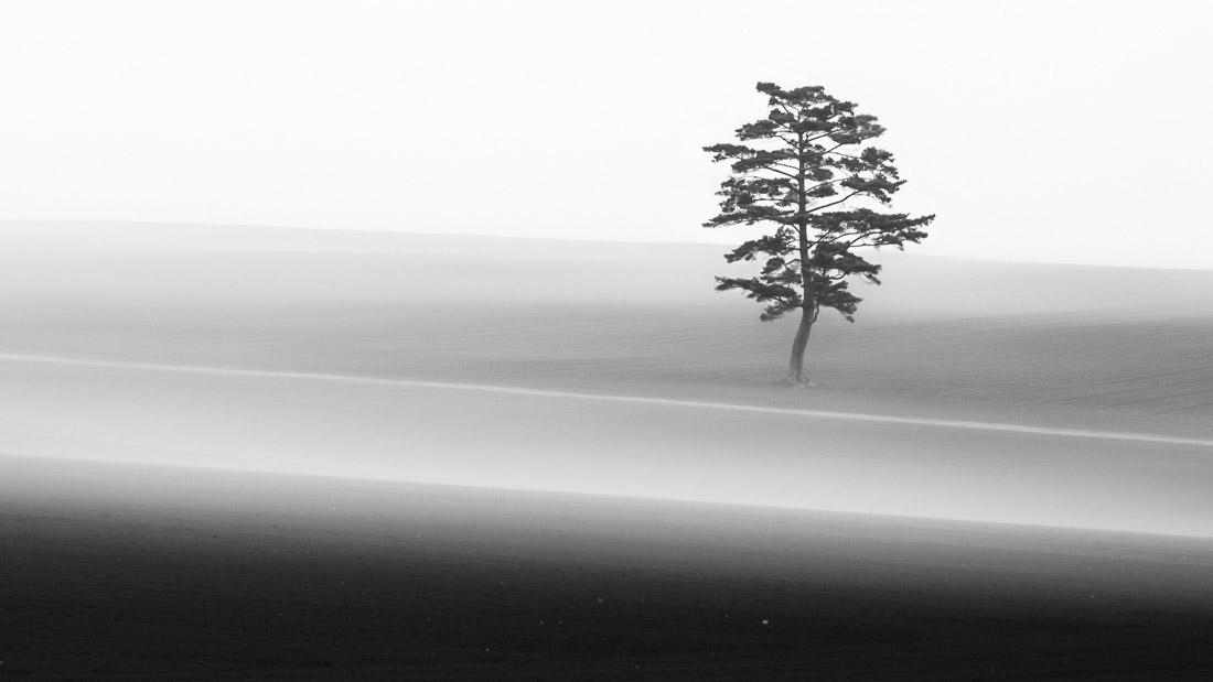 Сосна, © Айя Ивасаки, 1-е место в категории «Пейзажи», серия, Конкурс чёрно-белой фотографии MonoVisions