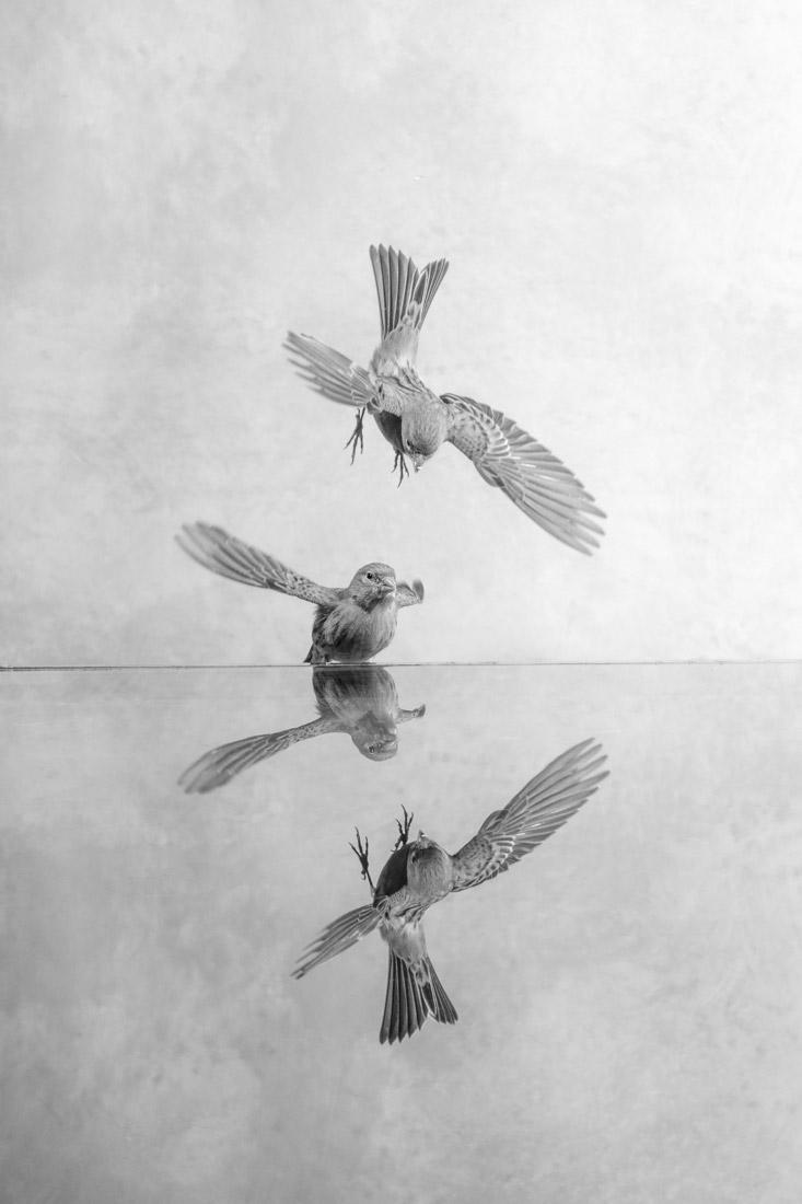 Диалоги, © Луиза Линч, 1-е место в категории «Живая природа», серия, Конкурс чёрно-белой фотографии MonoVisions