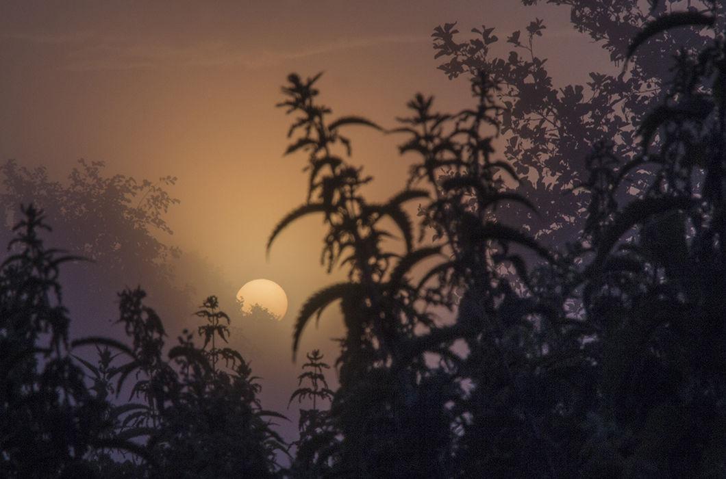 Каждое утро — подарок. Деревня Колокша, Владимирская область. © Светлана Тарасова, Фотоконкурс «Россия. Идеи для путешествий» телеканала «Моя Планета»