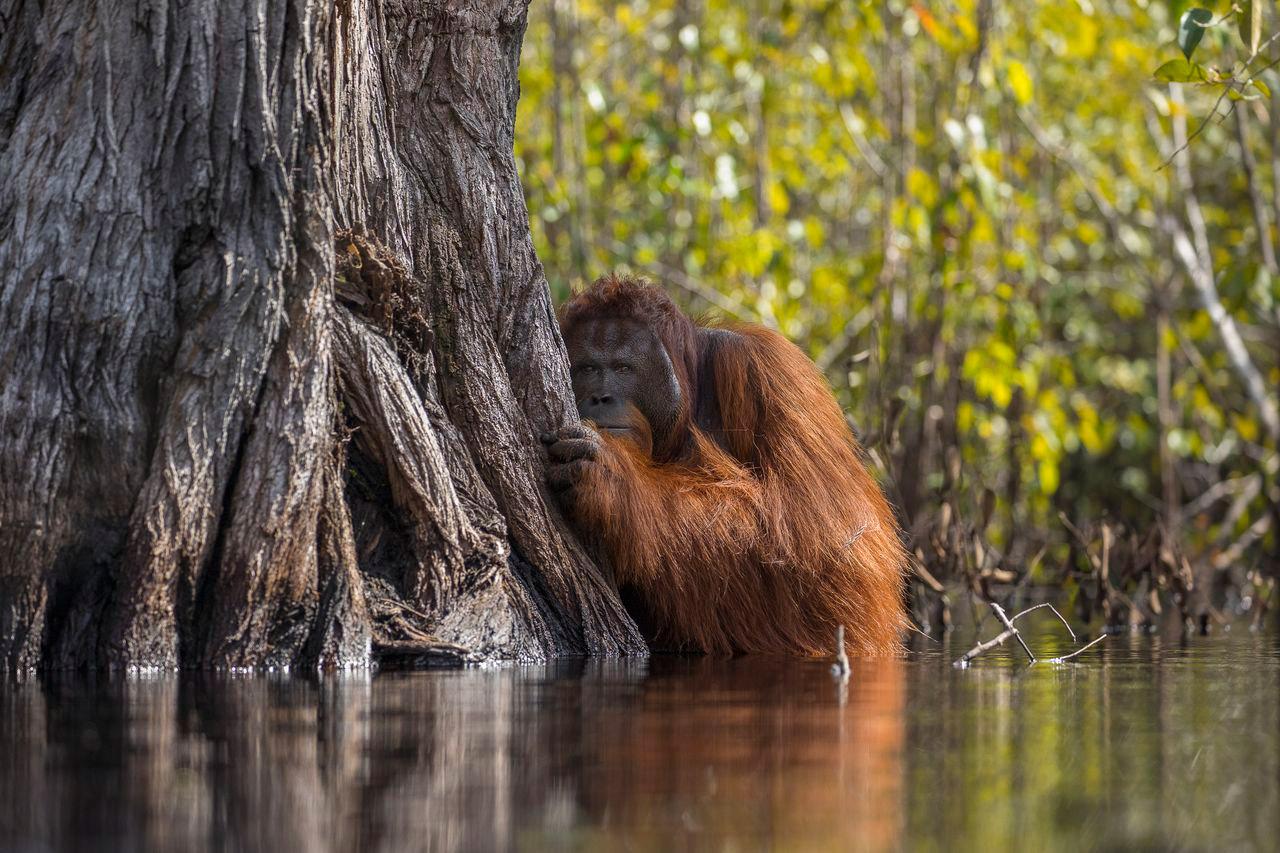 Лицом к лицу на реке в Борнео, © Джаяпракаш Джоги Боян / Jayaprakash Joghee Bojan, Гран-при конкурса, Фотоконкурс Nature Photographer of the Year Contest